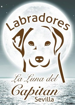 Perros Labradores de Luna del Capitán. Sevilla